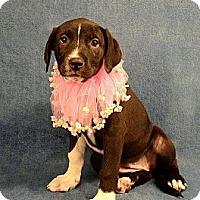 Adopt A Pet :: Sarah - Lapeer, MI