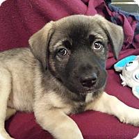 Adopt A Pet :: Phoebe Pup - Homewood, AL