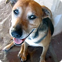 Adopt A Pet :: Destry - Santa Fe, NM