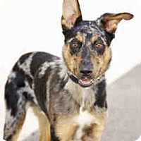 Adopt A Pet :: Bowser - Only $65 adoption! - Litchfield Park, AZ