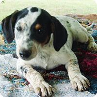 Adopt A Pet :: Jason - Allentown, PA