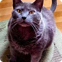 Adopt A Pet :: Pepper - Alexandria, VA