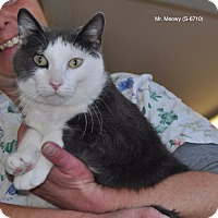 Adopt A Pet :: Mr. Meowy - Sunrise Beach, MO
