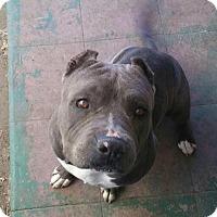 Adopt A Pet :: Tyson - Mission Viejo, CA