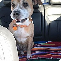 Adopt A Pet :: Jenny - The Perfect Lady - Seattle, WA