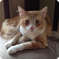 Adopt A Pet :: Bass - Germantown, MD