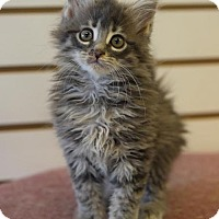 Adopt A Pet :: Destiny - DFW Metroplex, TX
