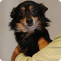 Adopt A Pet :: Kipper - Sylva, NC