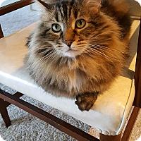 Adopt A Pet :: Bachelor - Laguna Woods, CA