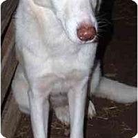 Adopt A Pet :: Autumn - Alexandria, VA