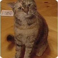 Adopt A Pet :: Ginger - Franklin, NC