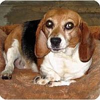 Adopt A Pet :: Jessie - Indianapolis, IN