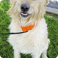 Adopt A Pet :: Dozer best fam dog - Sacramento, CA