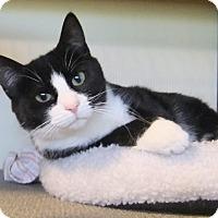 Adopt A Pet :: Vivian - Edmonton, AB
