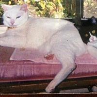 Adopt A Pet :: Baby and Mushi - Orange, CA