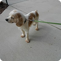 Adopt A Pet :: Ben-Aggessive issues/put down - Kannapolis, NC