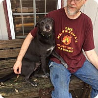 Adopt A Pet :: Bessie - Fair Oaks Ranch, TX
