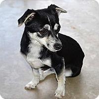 Adopt A Pet :: Romi - Tavares, FL