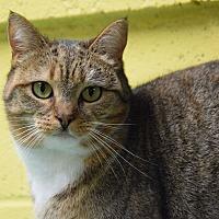 Adopt A Pet :: Venetian - Pottsville, PA