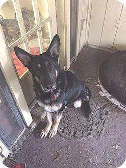 German Shepherd Dog Mix Dog for adoption in Memphis, Tennessee - Bismarck