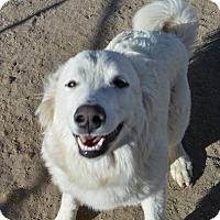 Adopt A Pet :: Pearl - Peyton, CO