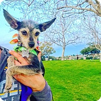 Adopt A Pet :: Martini - San Diego, CA