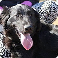 Adopt A Pet :: Fenway 750 - Naples, FL