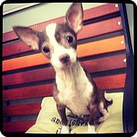 Adopt A Pet :: Mina - Grand Bay, AL