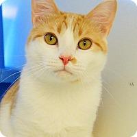 Adopt A Pet :: Rudy - Colorado Springs, CO
