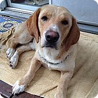 Adopt A Pet :: Walter - Upper Saddle River, NJ