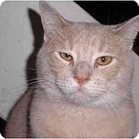Adopt A Pet :: Max - Warren, MI