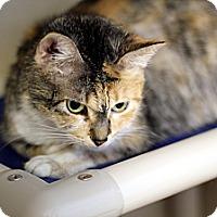 Adopt A Pet :: Bridgette Widgette - Chicago, IL