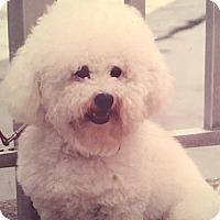 Adopt A Pet :: Vigo - East Hanover, NJ