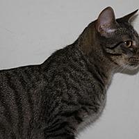 Adopt A Pet :: Corbin - Torrance, CA