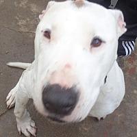Adopt A Pet :: Bevan - San Diego/Imperial Beach, CA