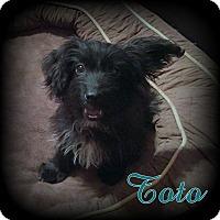 Adopt A Pet :: Toto - Denver, NC