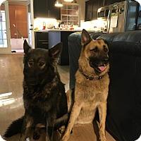 Adopt A Pet :: Maddie - Riverview, FL