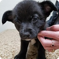Adopt A Pet :: Valentino - Newcastle, OK