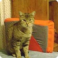 Adopt A Pet :: Carla - Kelso/Longview, WA