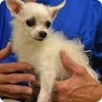 Adopt A Pet :: Jimmy - Mahopac, NY