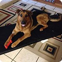 Adopt A Pet :: Maxwell - Austin, TX