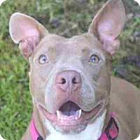 Adopt A Pet :: Esther - thibodaux, LA