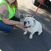 Adopt A Pet :: Spike - Odessa, FL