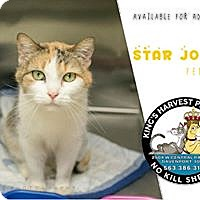 Adopt A Pet :: Star Jones - Davenport, IA