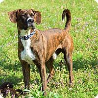 Adopt A Pet :: Roscoe - Memphis, TN