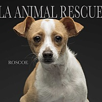 Adopt A Pet :: Roscoe - Los Angeles, CA