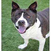 Adopt A Pet :: BONES - Los Angeles, CA