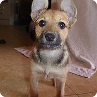 Adopt A Pet :: Paige - San Diego, CA