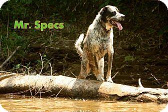 Bluetick Coonhound Mix Dog for adoption in Danbury, Connecticut - Mr. Specs