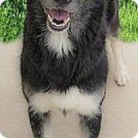 Adopt A Pet :: Cowboy needs foster or home - Sacramento, CA